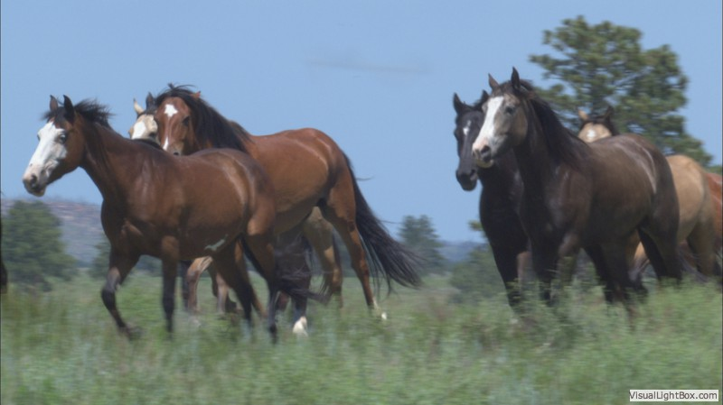 wildhorse black girls personals Please click here to view the dates and more details for our 2018 girls summer horse camps wildhorse ranch & outfitters is located in central alberta two hours.